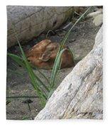 Fawn Resting On Beach Fleece Blanket