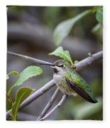 Female Anna's Hummingbird Fleece Blanket
