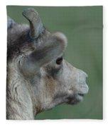 Female Bighorn Fleece Blanket