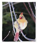 Female Cardinal In Tree Fleece Blanket