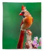 Female Cardinal Posing Pretty  Fleece Blanket