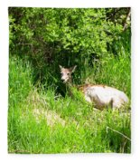 Female Deer Resting Fleece Blanket