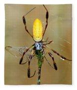 Female Golden Silk Spider Eating Fleece Blanket