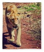Female Lion Walking. Ngorongoro In Tanzania Fleece Blanket