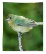 Female Painted Bunting Passerina Ciris Fleece Blanket