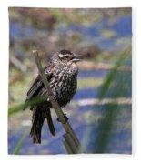 Female Red-winged Blackbird Fleece Blanket