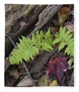 Fern And Maple Leaves Maine Img 6182 Fleece Blanket