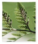 Fern Seeds Fleece Blanket