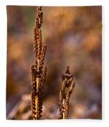 Fern Spore Stalk In Morning 2 Fleece Blanket