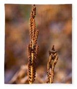 Fern Spore Stalk In Morning Sun Fleece Blanket