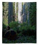 Ferns Of The Redwood Forest Fleece Blanket