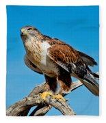 Ferruginous Hawk About To Take Fleece Blanket