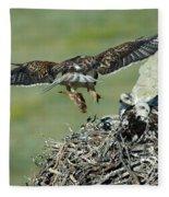 Ferruginous Hawk Bringing Food To Young Fleece Blanket