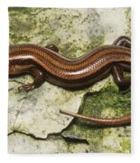 Five-lined Skink Fleece Blanket