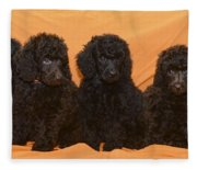Five Poodle Puppies  Fleece Blanket
