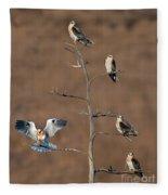 Five White-tailed Kite Siblings Fleece Blanket