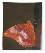 Flame-bordered Charaxes Butterfly #3 Fleece Blanket