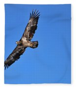 Fledgling Bald Eagle 5048 Fleece Blanket