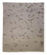 Flock Of Plovers Fleece Blanket
