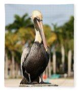 Florida Brown Pelican Fleece Blanket