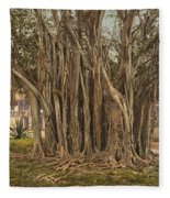 Florida Rubber Tree, C1900 Fleece Blanket