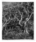 Florida Scrub Oaks Painted Bw  Fleece Blanket
