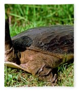 Florida Softshell Turtle Apalone Ferox Fleece Blanket