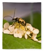 Flower Beetle Fleece Blanket
