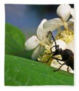 Flower Rise Over Beetle Fleece Blanket