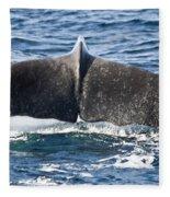 Flukes Of A Sperm Whale Fleece Blanket