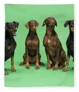 Four Dobermans Sitting Down Fleece Blanket
