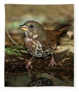 Fox Sparrow Drinking Fleece Blanket