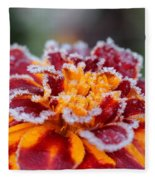 French Marigold Named Durango Red Outlined With Frost Fleece Blanket
