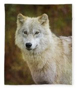 Friendly Beauty.. Fleece Blanket