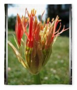 From Bud To Bloom - African Blood Lily Fleece Blanket