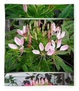 From Bud To Bloom - Cleome Named Pink Queen Fleece Blanket