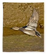 Gadwall Drake In Flight Fleece Blanket