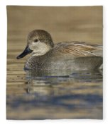 Gadwall On Icy Pond Fleece Blanket