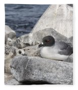 Galapagos Seagull And Her Chick Fleece Blanket