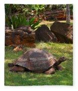 Galapagos Turtle At Honolulu Zoo Fleece Blanket