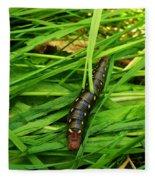 Gallium Sphinx Caterpillar Fleece Blanket
