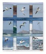 Gannets Galore Fleece Blanket
