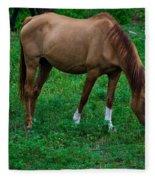 Gazing Horse Fleece Blanket