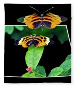 Gentle Butterfly Courtship 01 Out Of Bounds Fleece Blanket