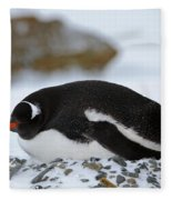 Gentoo Penguin On Nest Fleece Blanket