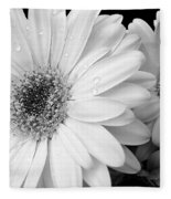 Gerber Daisies In Black And White Fleece Blanket