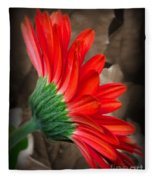 Gerber Daisy Bashful Red Fleece Blanket