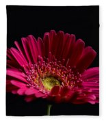 Gerbera Daisy 2 Fleece Blanket
