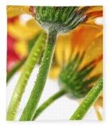 Gerbera Flowers Fleece Blanket