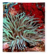 Giant Green Sea Anemone Against Red Coral Fleece Blanket